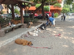 Dog training in Mexico City's Colonia Condesa