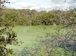 Estero De Yugo Mazatlan Cerritos Winter visit