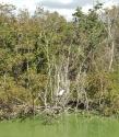 Estero De Yugo Mazatlan Cerritos egret